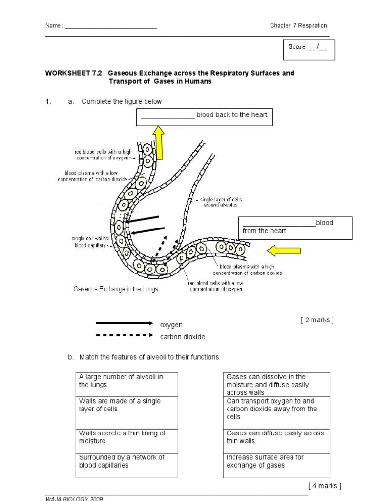 Image Result For Worksheet On Gaseous Exchange Biology