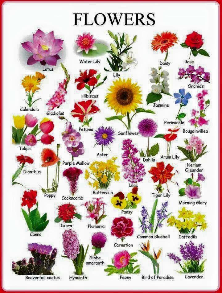 Flowerspaperdecoupage Matura Z Języka Angielskiego