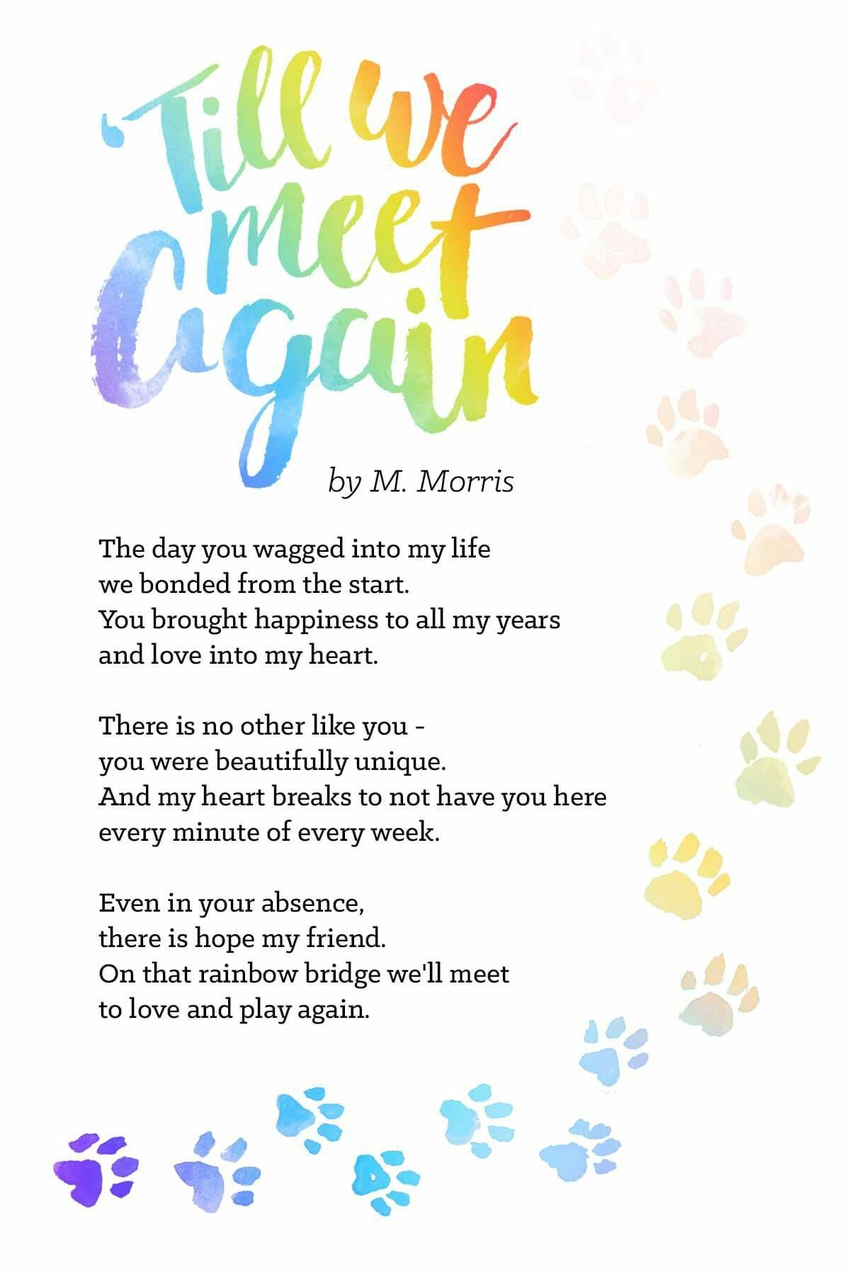 Till we meet again Pet quotes dog, Pet grief, Pet loss grief
