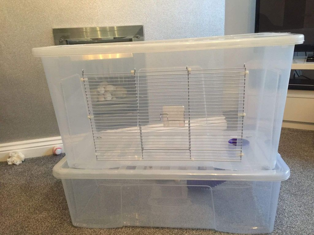 Two level hamster bin cage hamsters and diy cages for Plastic bin guinea pig cage