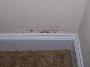 Drywall Mold Removal Mold In Bathroom Bathroom Mold Remover Molding