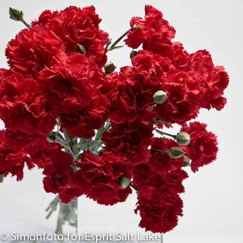 Natural Carnation Flower Tea Carnation Flower Flower Tea Healthy Teas