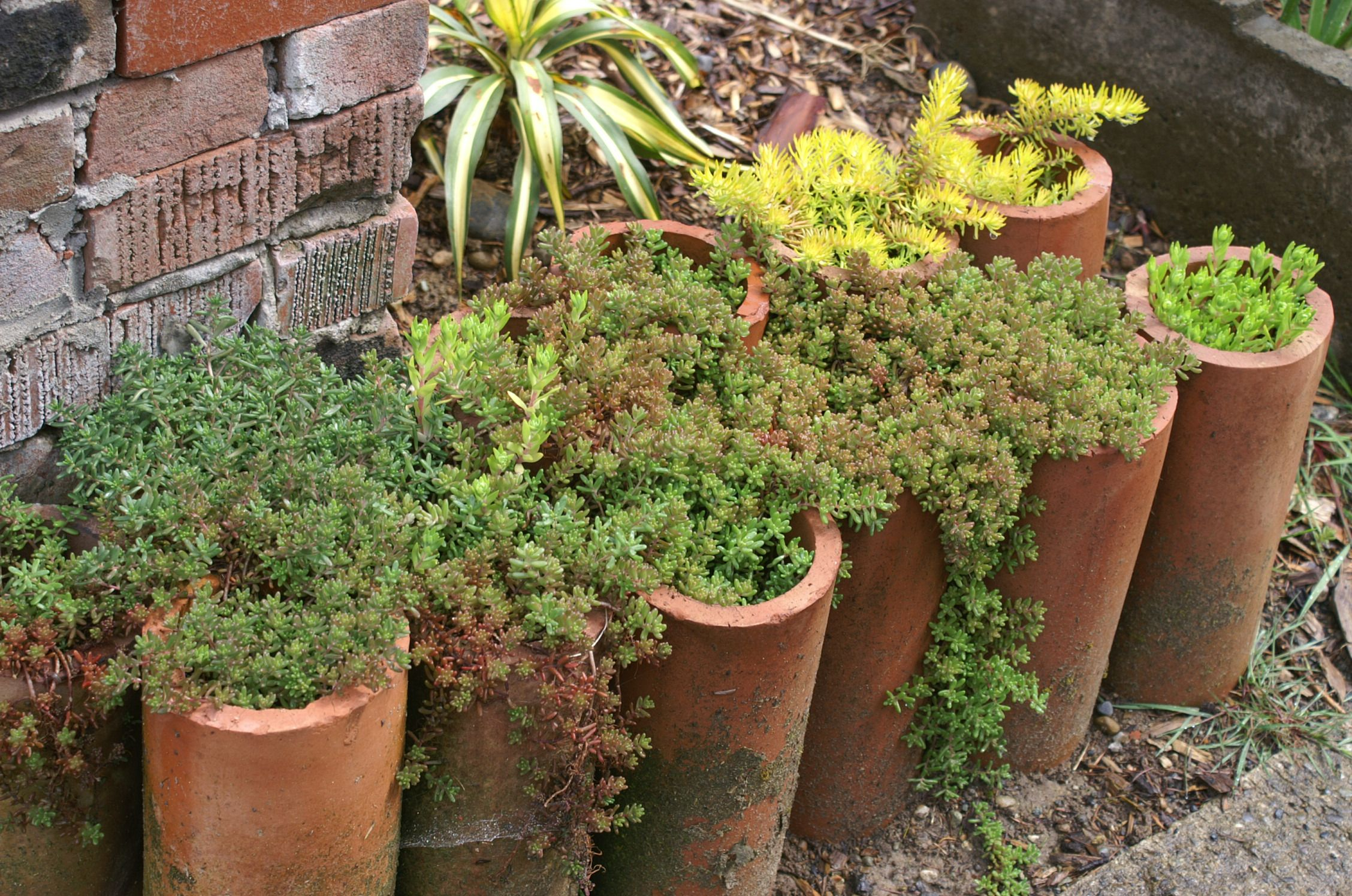 Clay drain pipes filled with succulents line an entranceway