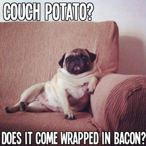 funny pug pictures nice funny pug meme to start this december day