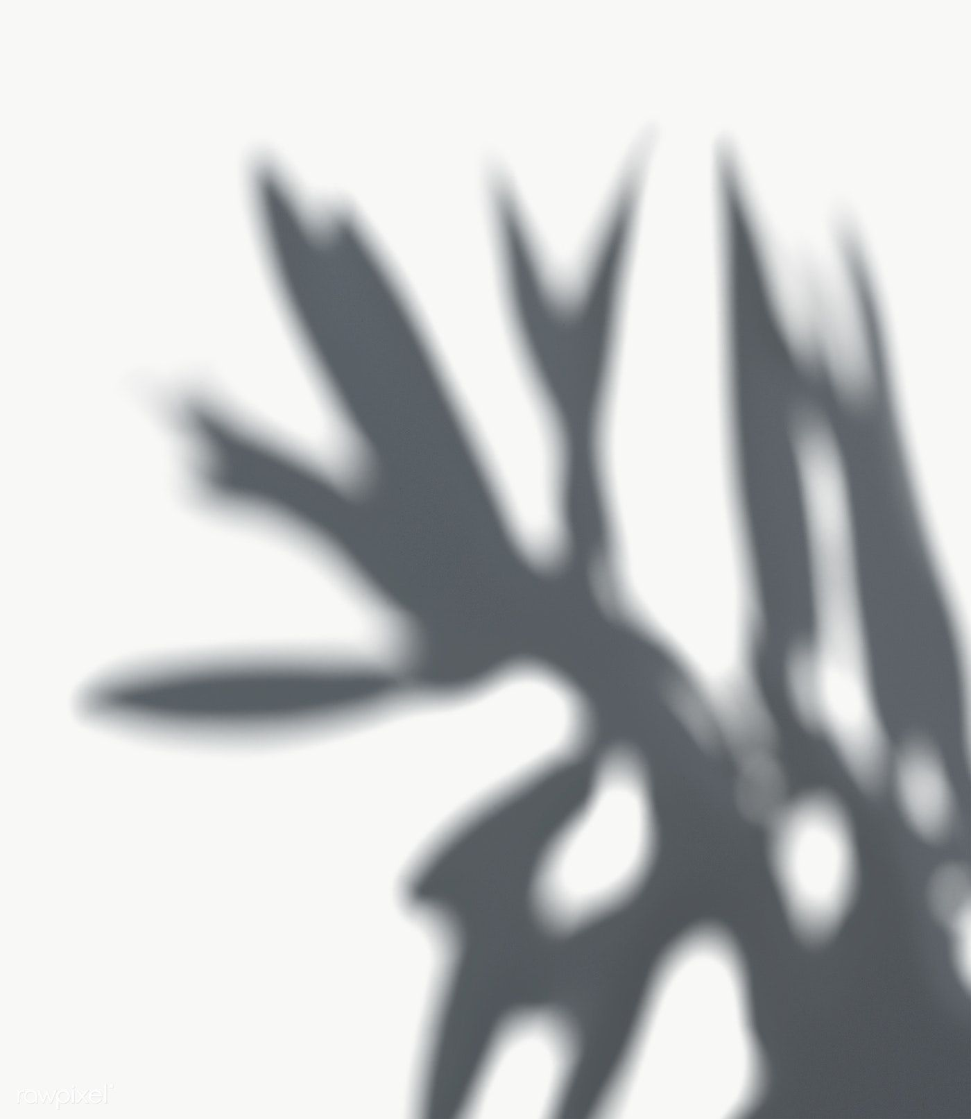 Download Premium Png Of Shadow Of Leaves On A White Wall 557637