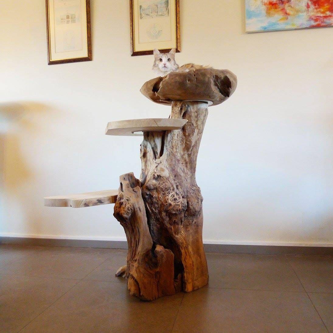 treeworld kratzbäume aus holz! (asten) - kratzbaum, klein - deine
