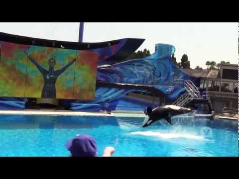 VIDEO: SeaWorld San Diego - YouTube