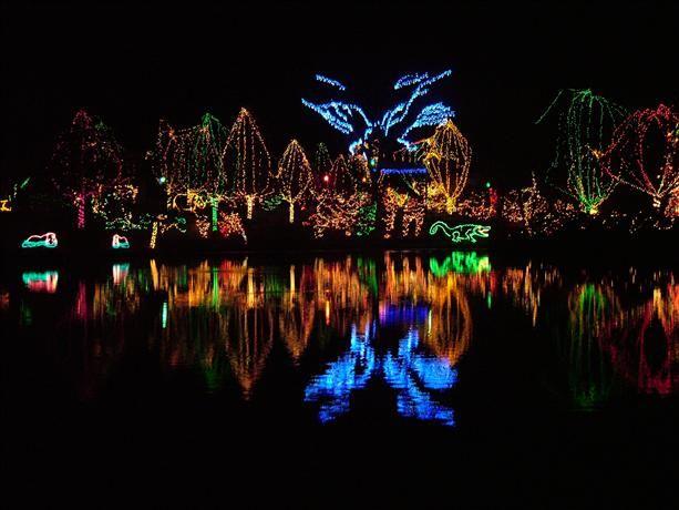 Columbus Ohio Zoo Christmas Light Show Christmas Light Show Christmas Lights Creative Christmas