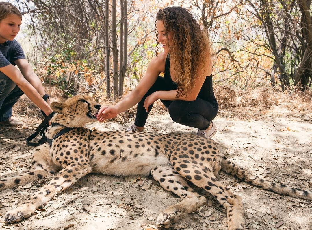 Cheetah Kisses Pscathaven Lingerfree Sofie Dossi Girl Photography Poses Gymnastics Poses