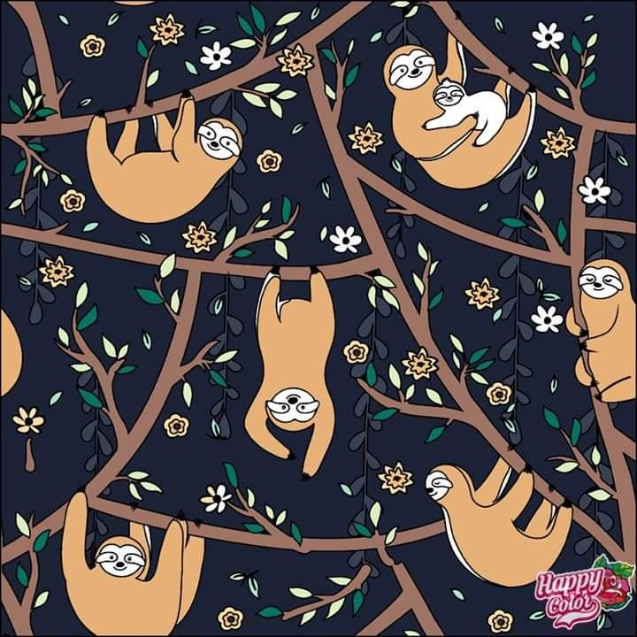 Pin by Katie Mccarthy on sloths Coloring book app