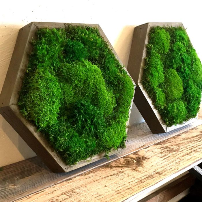 "A hexagonal 14"" reclaimed wood frame by Artisan Moss. Green wall art adds natural outdoor beauty to your interior!"