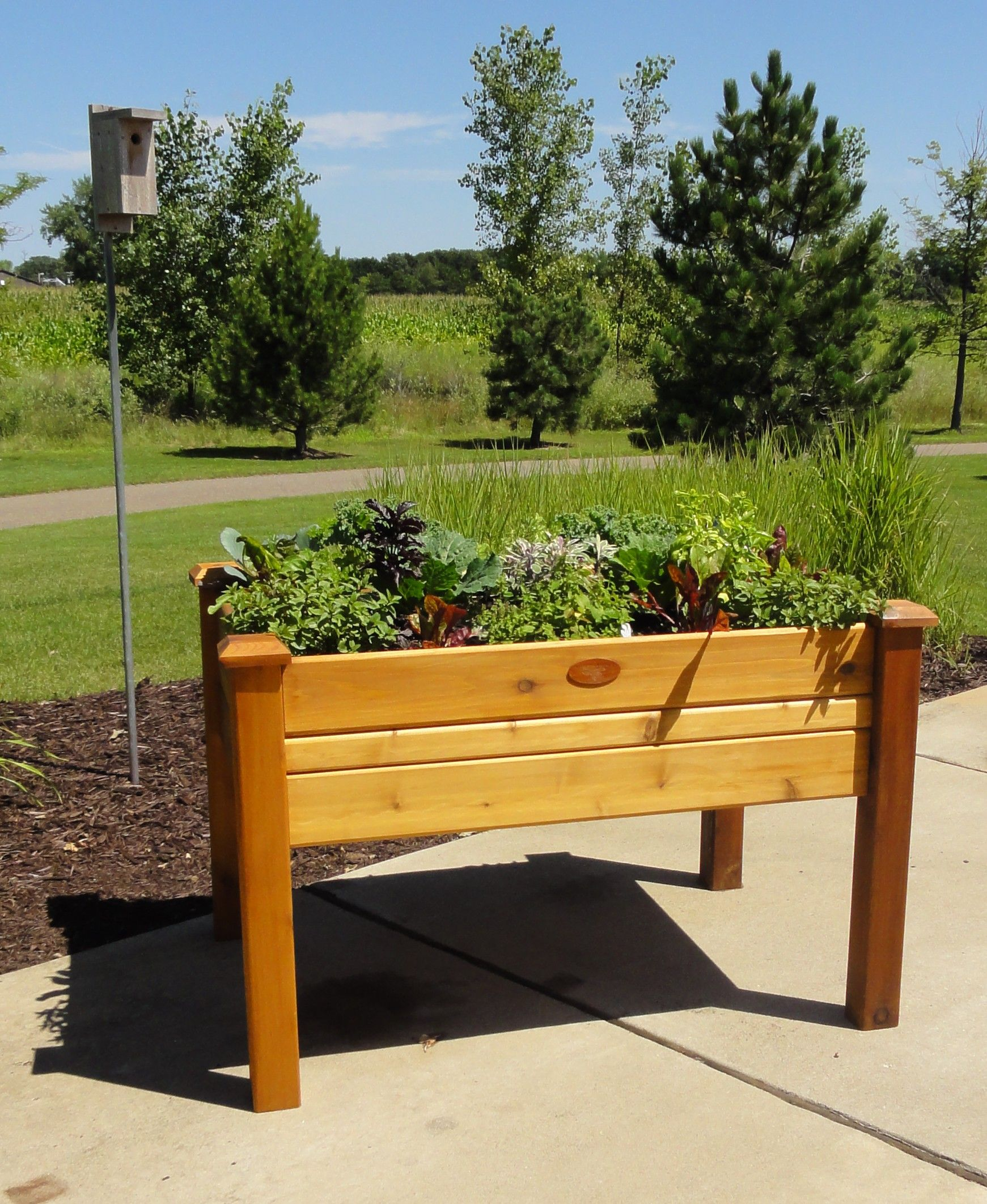 Elevated garden beds to protect herbs and veggies from the