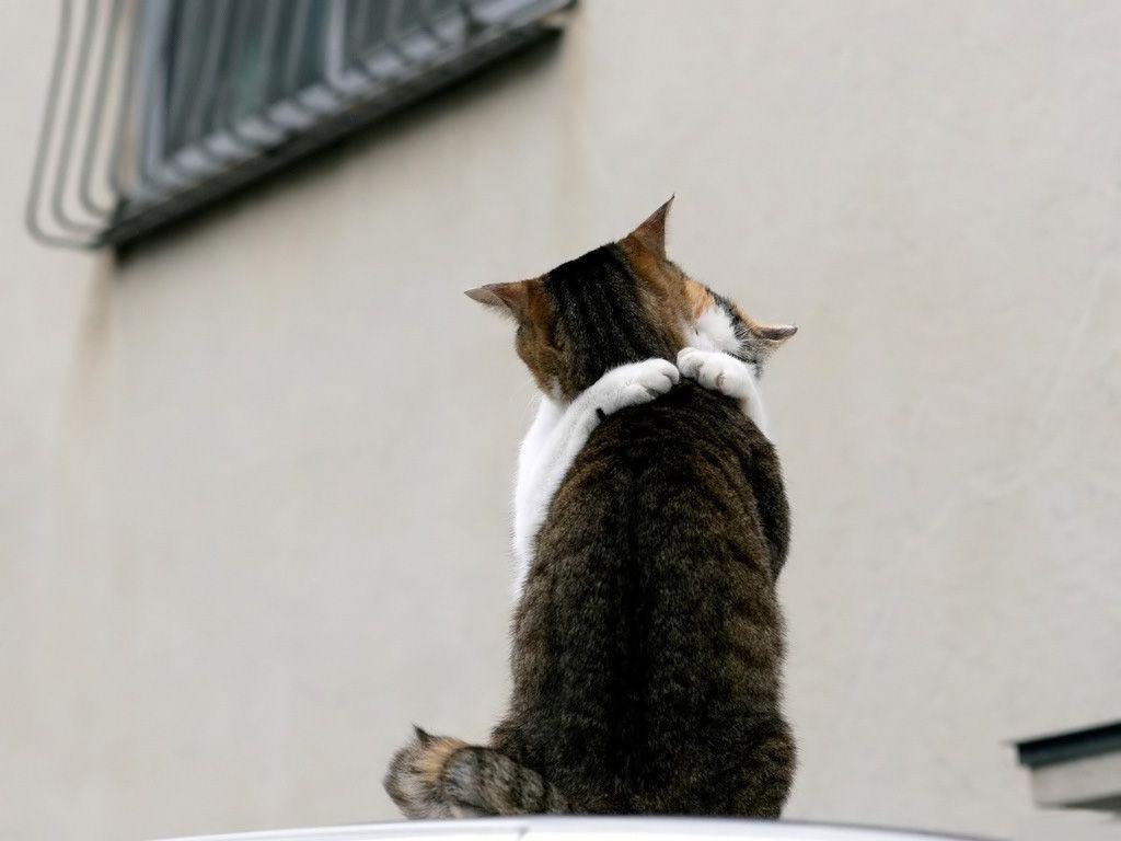 True kitty love
