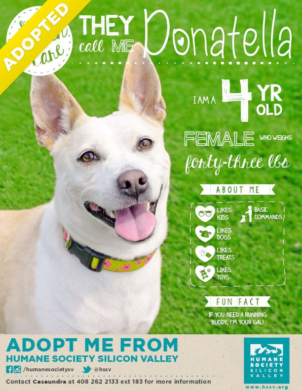 Donatella Has Been Adopted Running Buddies Adoption Foster Dog