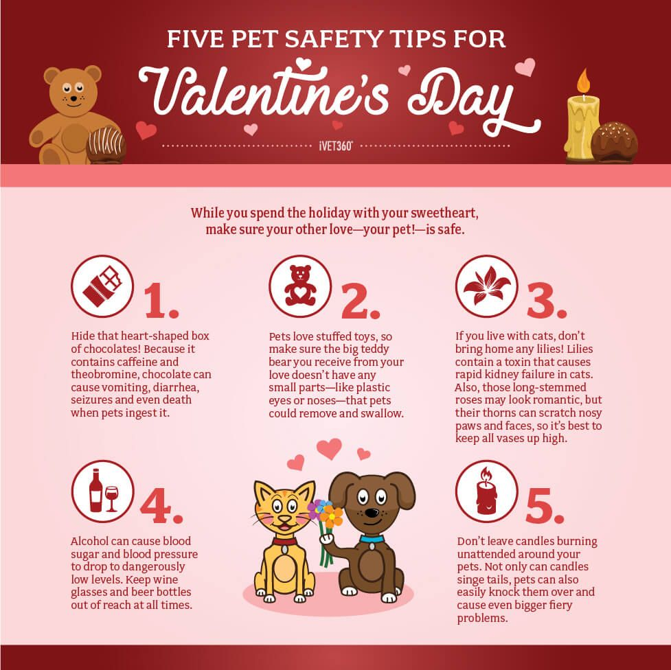 5 Pet Safety Tips For Valentines Day Infographic Animal Valentine Pet Holiday Love Your Pet
