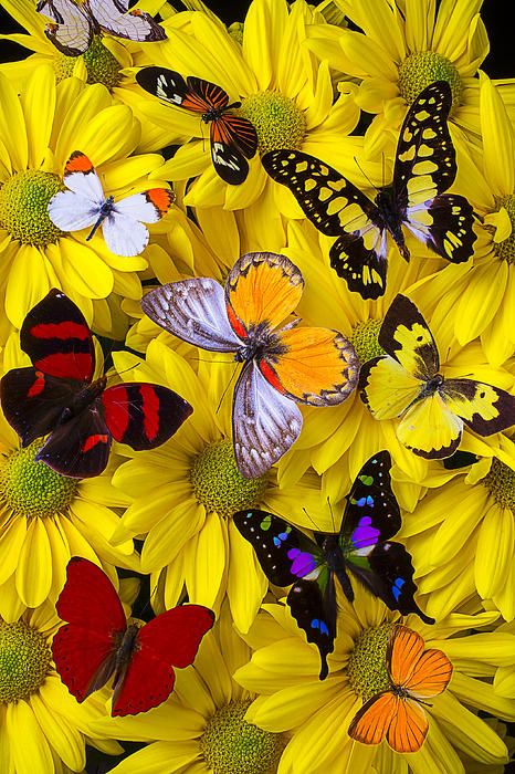 Many Butterflies On Mums Beach Towel for Sale by Garry Gay