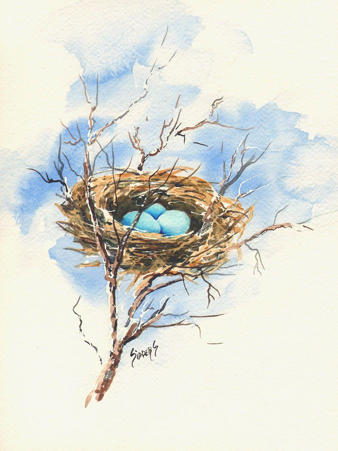 Robin S Nest By Sam Sidders In 2020 Bird Drawings Watercolor