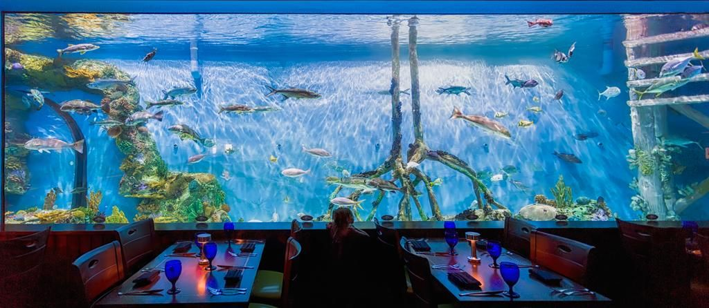 Guy Harvey Outpost On St Pete Beach Rumfish Grill Is A Must See