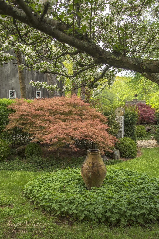 Watnong | Pinterest | Acer palmatum, Japanese maple and Garden ideas