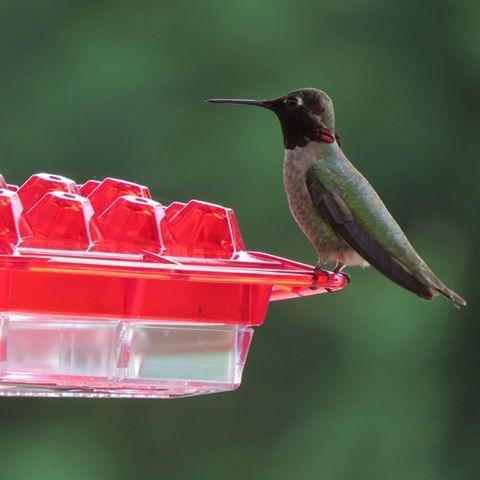 Kscanuck The Best Hummingbird Feeder You Ll Ever Buy Humming Bird Feeders Hummingbird Feeder
