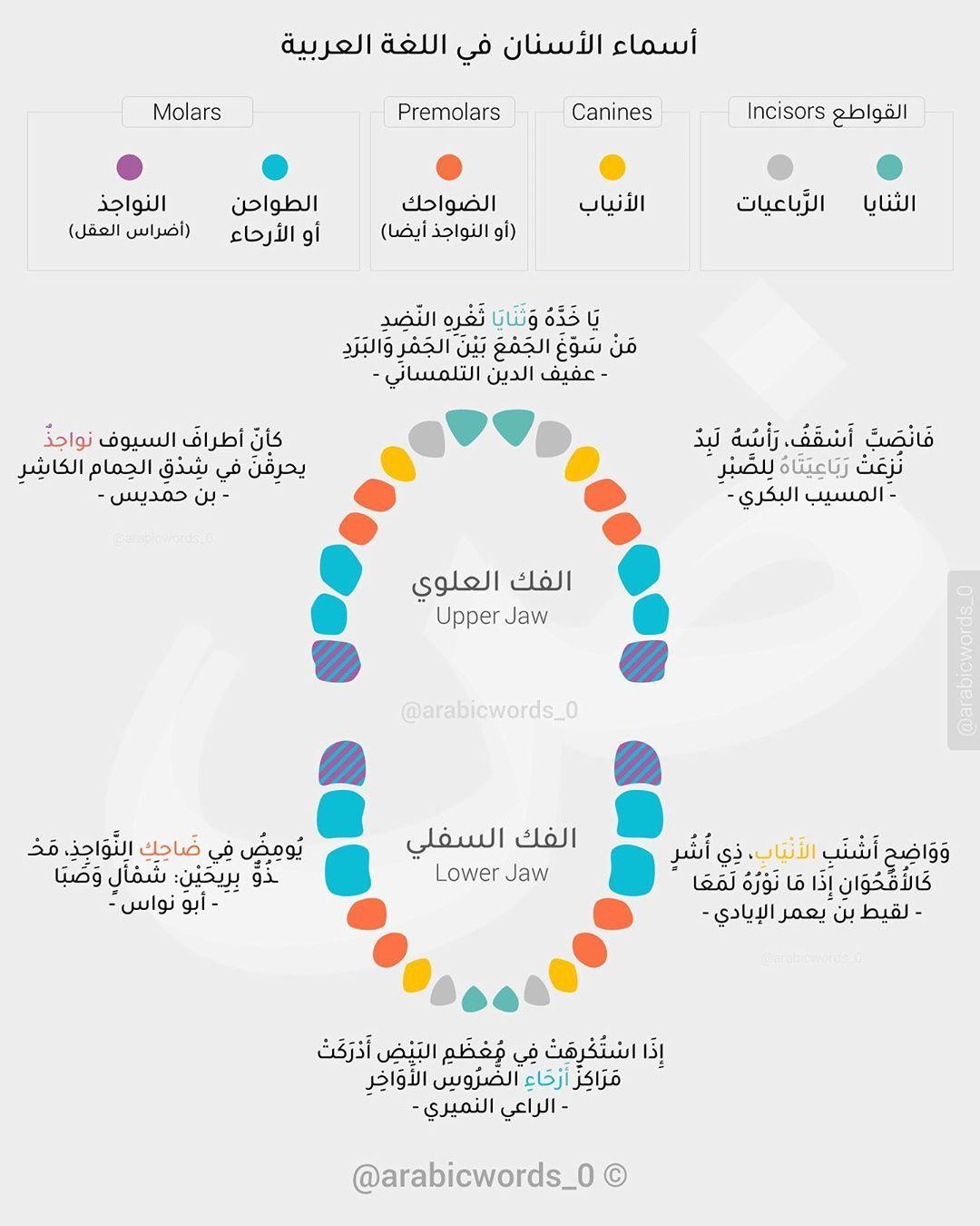 أسماء الأسنان Teeth Names In Arabic Live Lokai Bracelet Lokai Bracelet Teeth