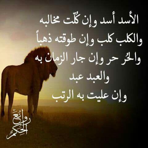 الحر حر وإن جار الزمان به Arabic Quotes Language Quotes Feelings Words