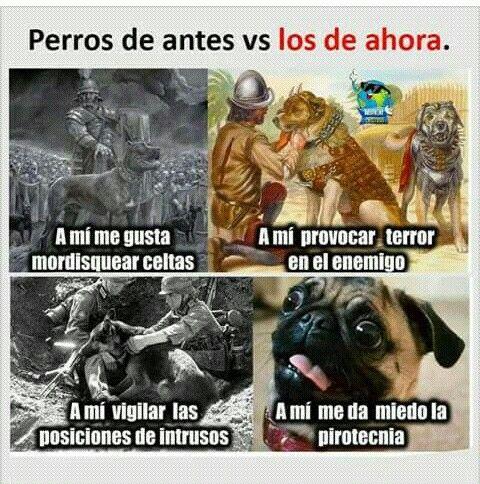 Perros Memes De Animales Divertidos Memes Perros