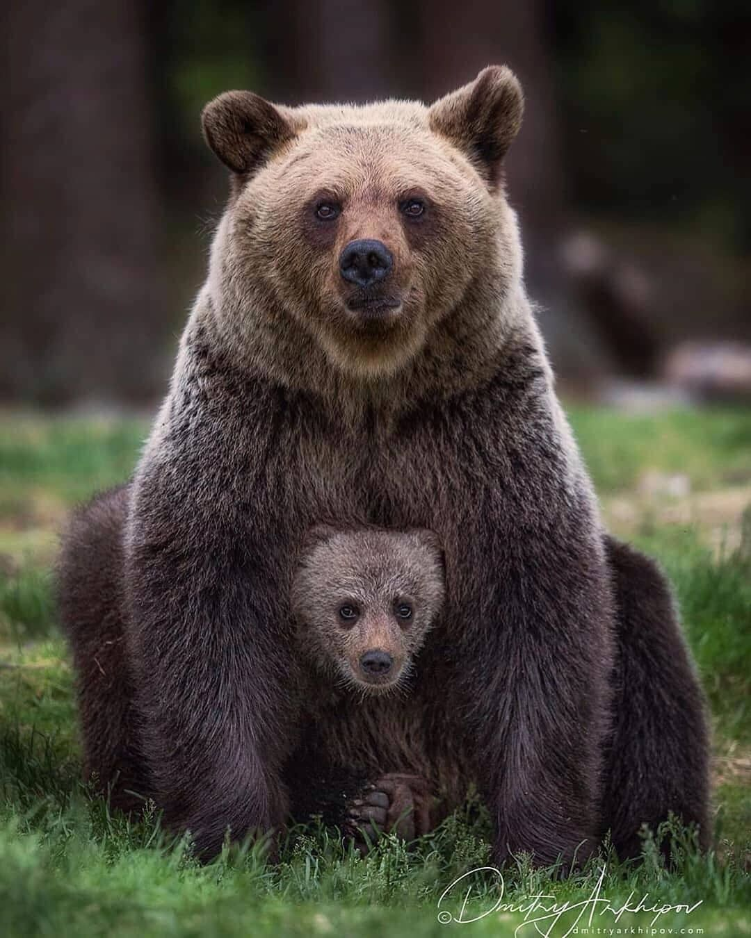 Grizzly bear with its little baby at SW! If you have time