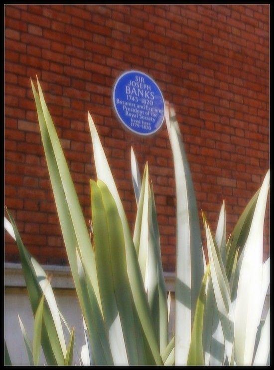 Tea in England | Tea, Sir Joseph Banks, and Spring Grove House
