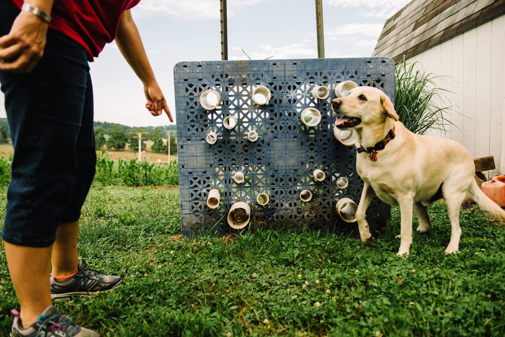With A Sniff And A Signal These Dogs Hunt Down Threats To Bees