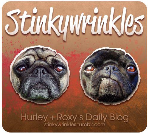 Stinkywrinkles We Ve Updated Our Blog New Background Header