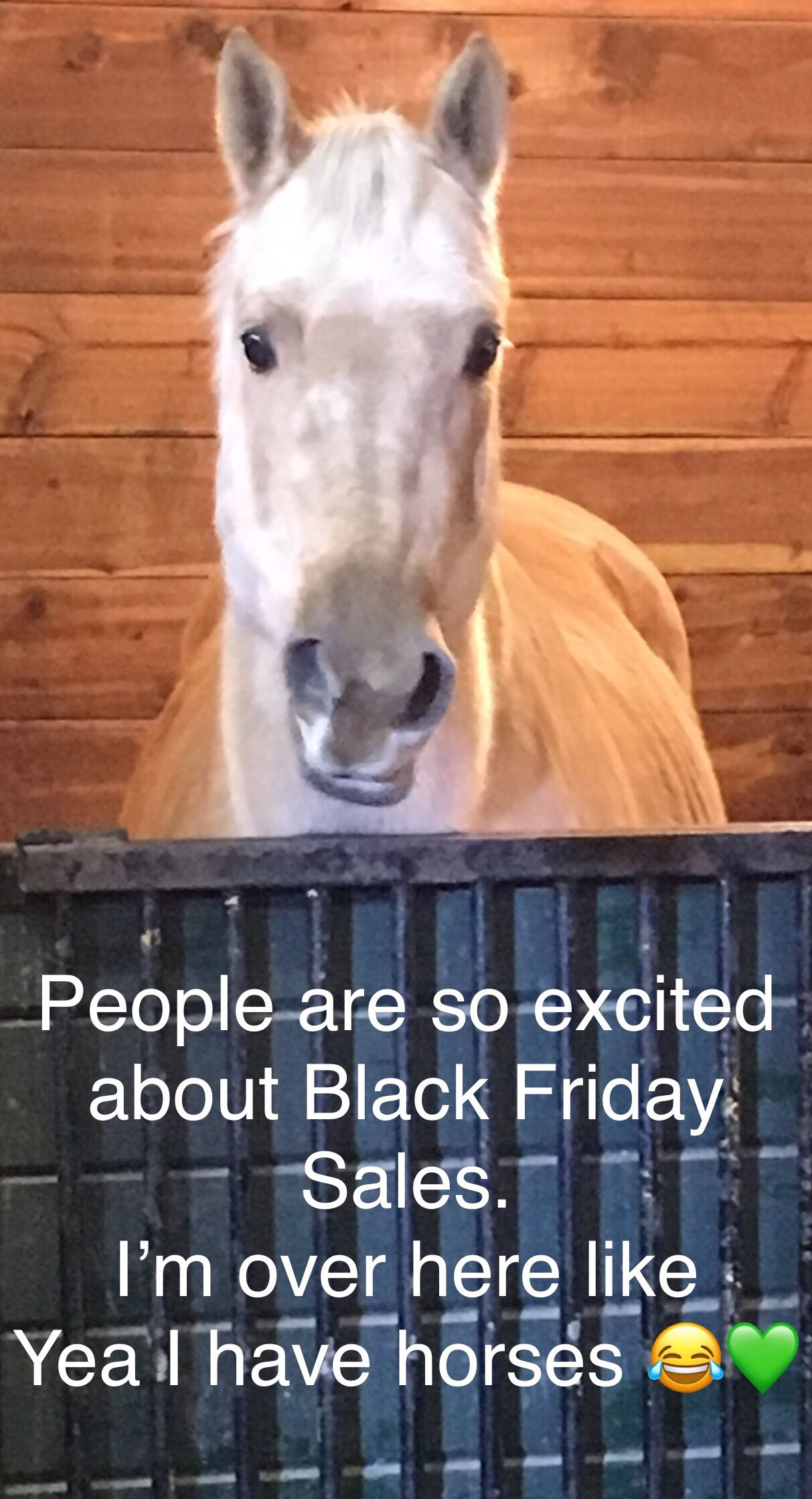 Black Friday Sales Horse Quotes Funny Horses Funny Horse Memes