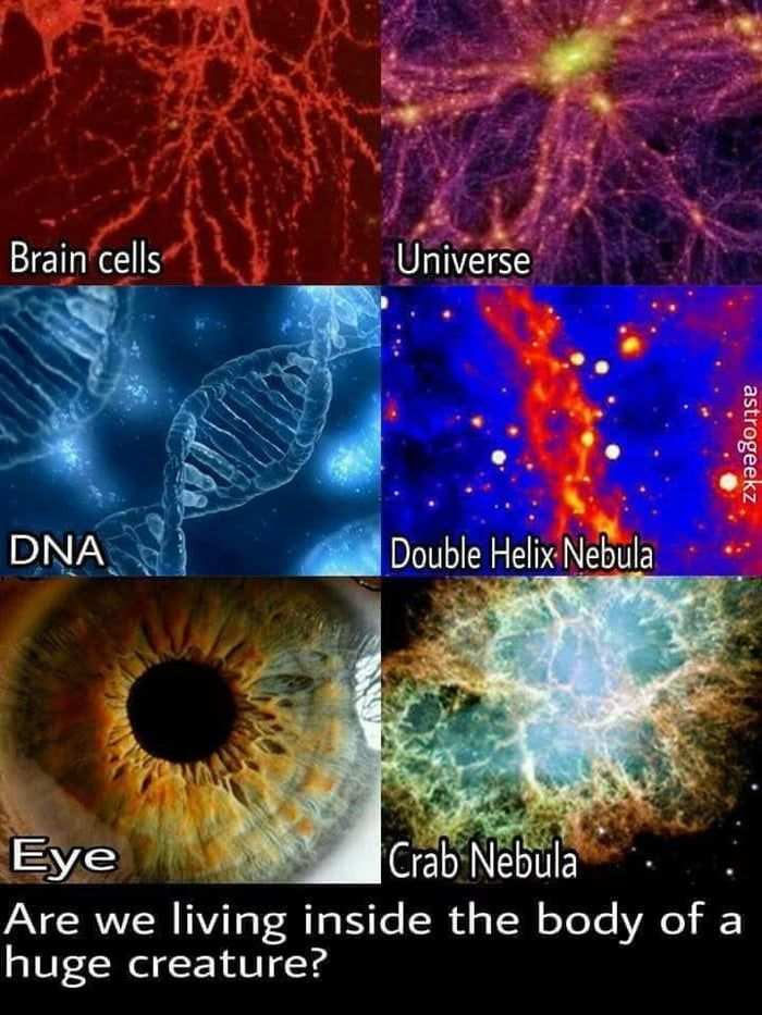 Photo of What if the Universe is a Giant living organism?