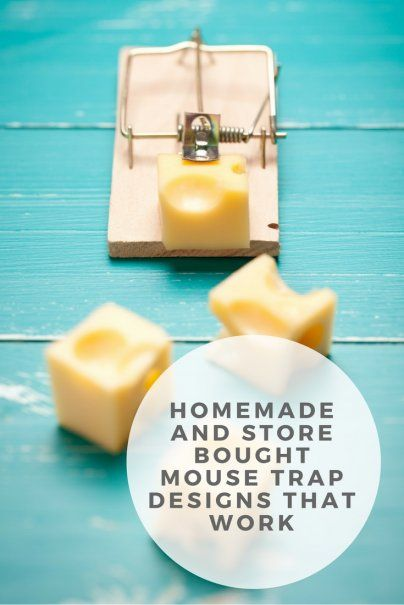 Homemade and Store Bought Mouse Trap Designs That Work ...