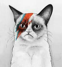 Simplismente Um Gato Bravo Arte Com Gatos Arte Para