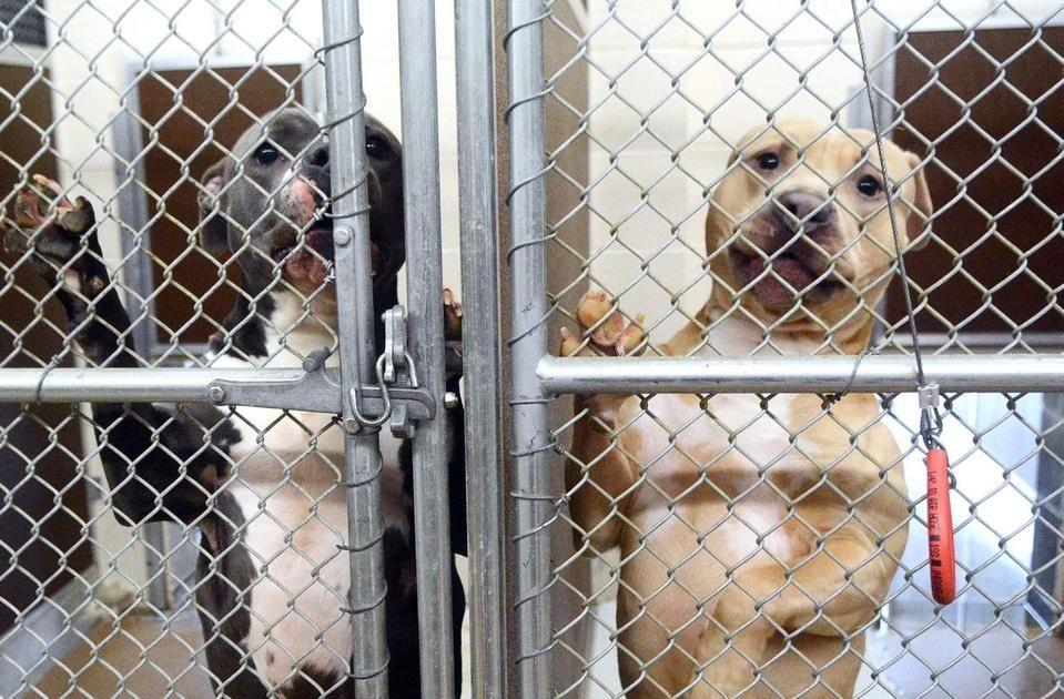 Insurers, activists clash over danger of dog breeds Dog