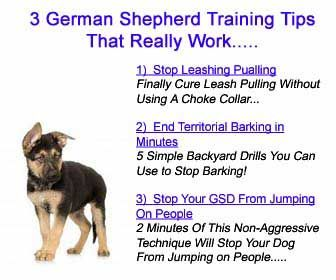 Correct Puppy Biting Problems In Your German Shepherd Puppy