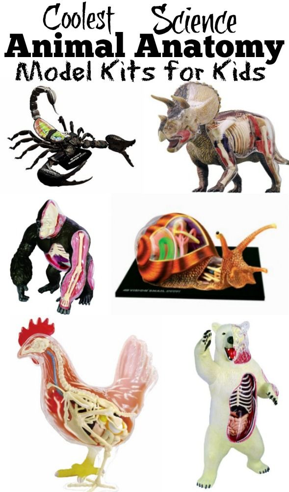 Coolest Science Animal Anatomy Model Kits for Kids: Hands on ...