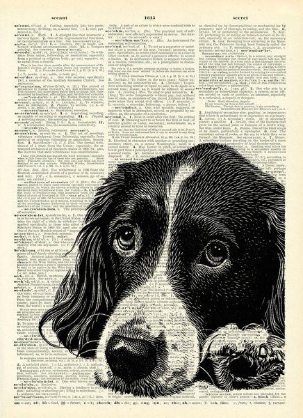 Springer Spaniel Art Google Search Spaniel Art Print