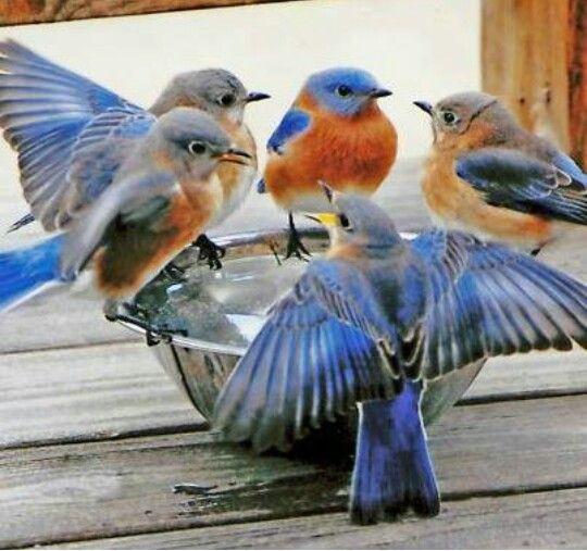 "* * BLUEBIRD RUNNIN' HIS BEAK: "" i Iz such a pessimist, my problem iz not dat de glass iz half-empty; it'z dat somebody stole de glass! """