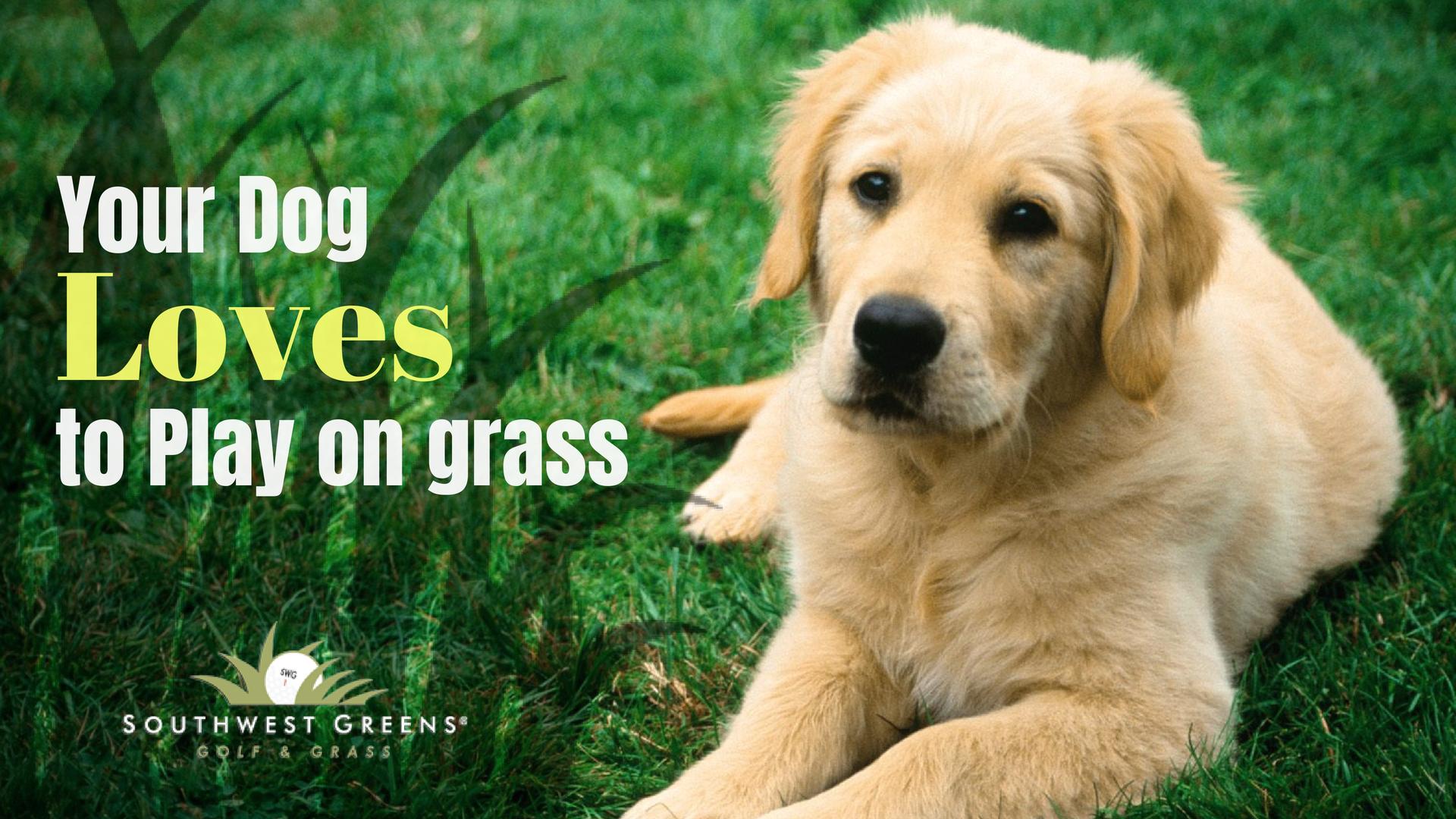 Обои Собака, grass, animals. Собаки