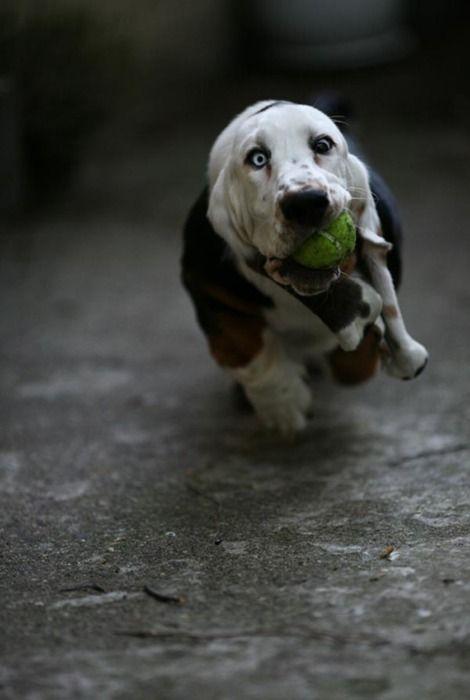 Pallolle kyytiä!