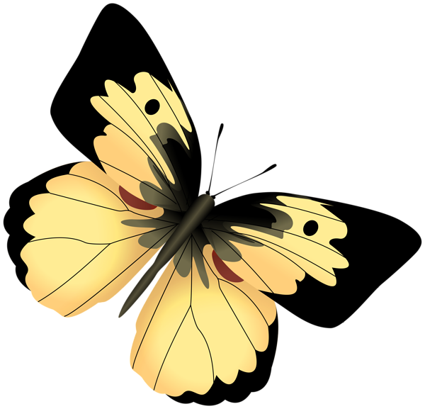 Yellow And Black Butterfly Png Clipart Image Black Butterfly Butterfly Clip Art Clipart Images