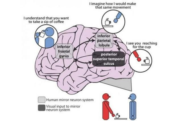 Brain Mapping Confirms Patients With Schizophrenia Have Impaired Ability To Imitate Brain Mapping Mirror Neuron Neuroscience