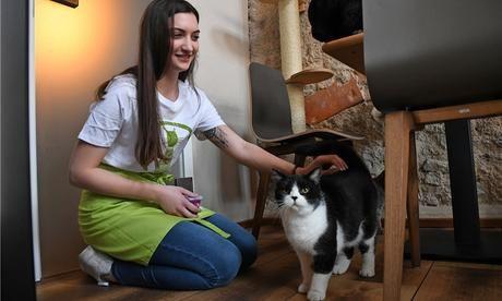 Katzen Kennenlernen :