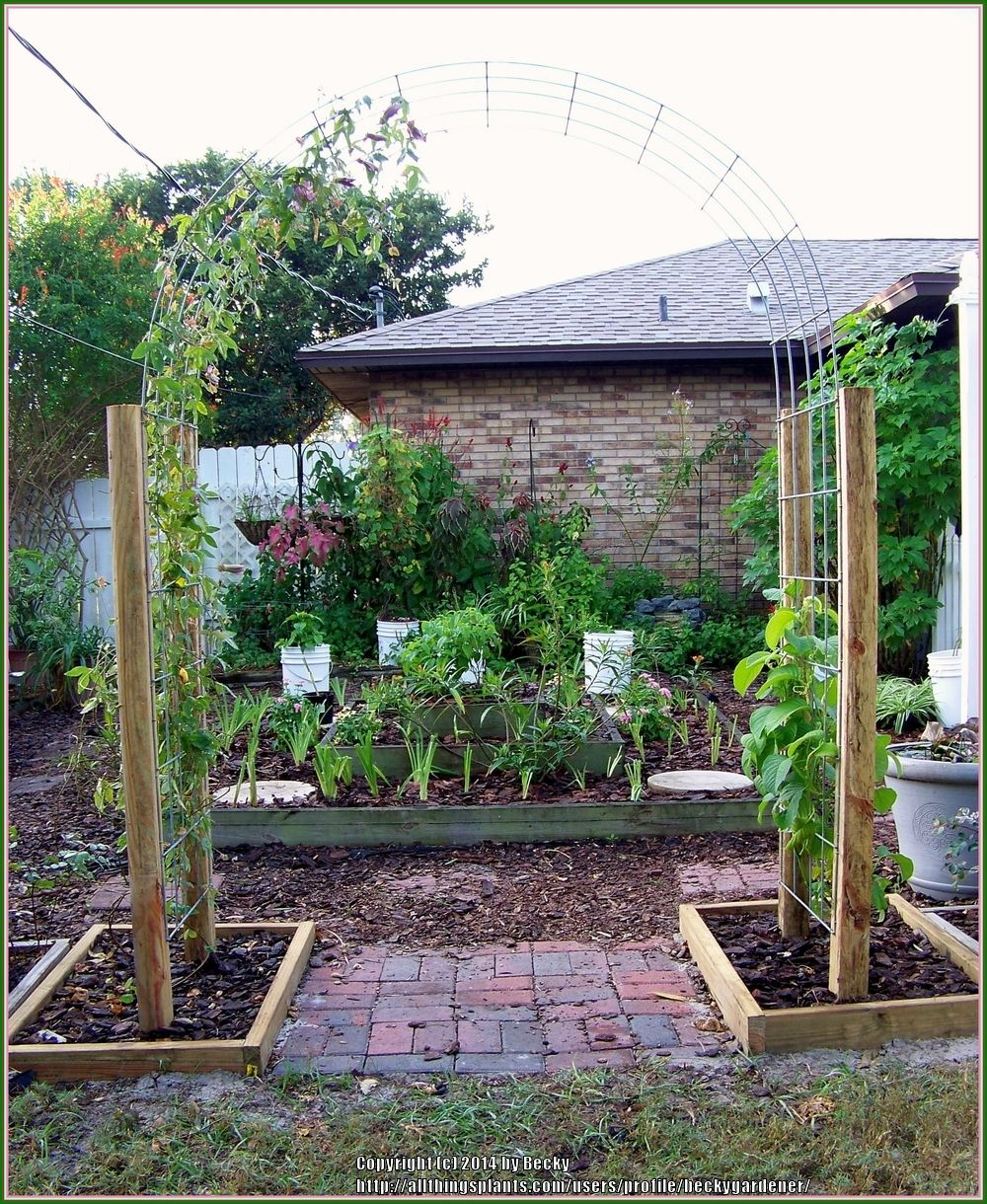 20 Brilliant Raised Garden Bed Ideas You Can Make In A: Feedlot Panels For Arbor...cheap Thumb Of 2014-12-30