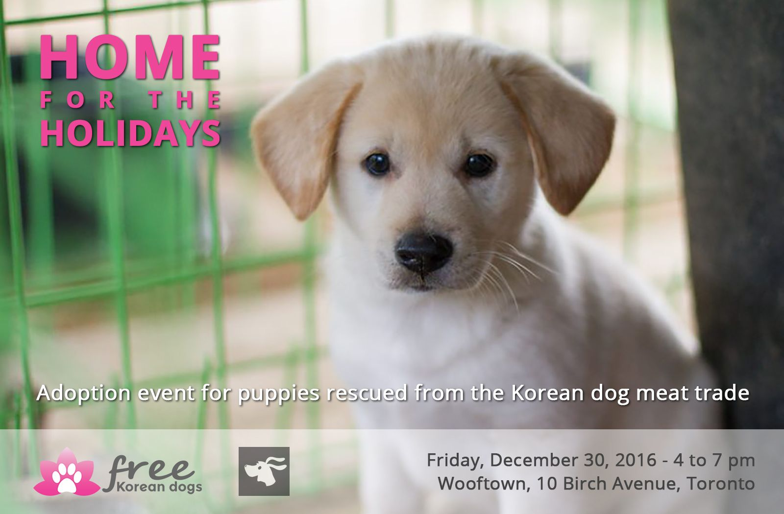 Bring these 6 puppies HomefortheHolidays. Rescued from