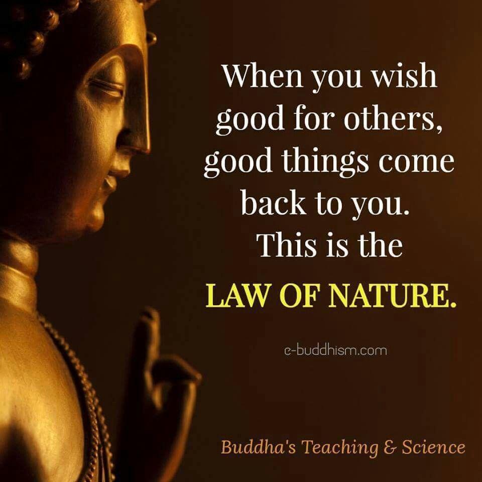 Peace · Buddha LifeBuddha QuoteTiny ...
