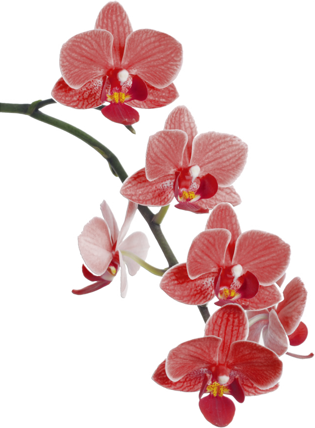 Imágenes para imprimir-Free Printables | Pinterest | Orchid and Flowers