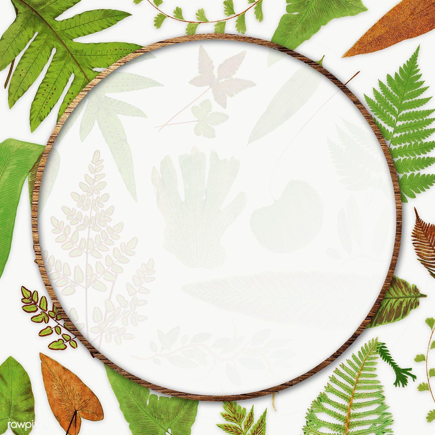 Download Premium Png Of Frame Of Fern Leaves Transparent Png 2251098 Flower Illustration Leaf Illustration Leaf Background